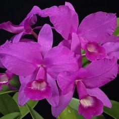 Hombre viajaba con 112 orquídeas de gran valor