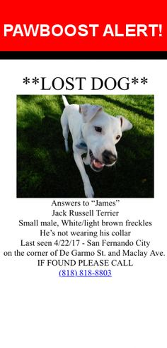 Please spread the word! James was last seen in San Fernando, CA 91340.  Message from Owner: My dog is **STILL MISSING**. We're afraid that he might have gotten picked up? James is a very friendly and playful dog who loves approaching people and other dogs. Please if you find him call the number on the flyer, if not, turn him in at the Los Angeles City East Valley Animal Shelter.   Nearest Address: Near de Garmo St & N Maclay Ave