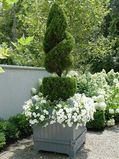 Spiral topiary with flowers