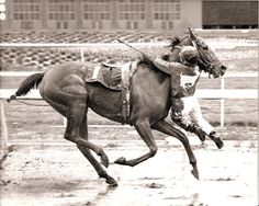 Feb. 3, 1989: Apprentice jockey Nate Hubbard hung on for second literally when his horse, Sweetwater Oak, stumbled near the finish line at Golden Gate Fields and flipped the rider out of his saddle. As he tumbled forward, Hubbard grabbed on to the fillys neck and hung in mid-air until the race was over. The track stewards ruled it an official finish because Hubbards feet never touched the ground and Sweetwater Oak carried her assigned weight throughout the race. autumngreer