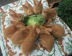 Funny Bunnies, Baby Bunnies, Cute Bunny, Bunny Rabbits, Bunny Bunny, Hamsters, Animals And Pets, Baby Animals, Funny Animals