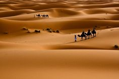 The Beauty of the Desert by Alex Lichtenberger on The Erg Chebbi (Erg=Sanddune) is located in the middle-eastern part of Morrocco on the border to Algeria and forms the beginning of the Sahara desert. Hd Wallpaper Desktop, Plant Wallpaper, Nature Wallpaper, Hd Landscape, Landscape Wallpaper, Cool Places To Visit, Places To Go, Desert Places, High Resolution Wallpapers