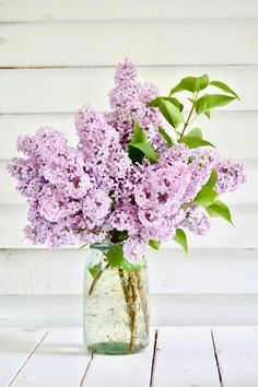 Earth Growing & Caring for Lilac Bushes, tips from a pro Lilac Flowers, Flowers Nature, Spring Flowers, Beautiful Flowers, Lilac Bushes, Feminine Decor, Tulips, Lilacs, Summer Garden