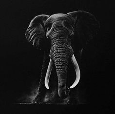 Awesome Drawing by Richard Symonds  Instagram.com/richardsymondsartist Elephant Drawing