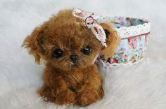 Puppy poodle sweet Foam By Tsybina Natali - Bear Pile