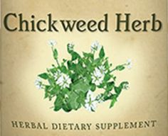 All Natural CHICKWEED HERB Liquid Tincture Herbal Extract for Healthy Digestive & Urinary Tracts and Skin Relief Herb Dietary Supplement USA