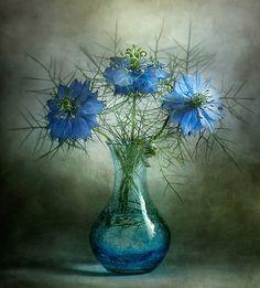 Beautiful Blue Nigella Flowers