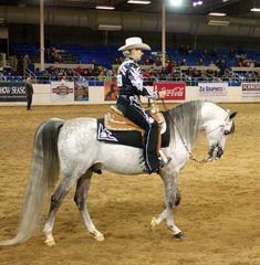 Scottsdale Arabian Horse Show- Western Pleasure class.