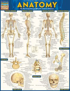 ANATOMY QuickStudy® Updated guide filled with over 1,400 anatomical illustrations. Great for doctors, nurses or EMTs.