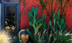 Cactos são ótimos para compor jardins em locais ensolarados e secos.