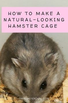 Create the best hamster cage using a natural theme. Here are tips and ideas and how to make a natural hamster cage theme, which cage, bedding, wheel, den, to buy and more! #hamstercageideas #hamstercagetheme #naturalhamstercagetheme #naturalthemecage #hamsterhouse #hamstercage #hamstercagedesign #hamsterpet #hamstercare #hamsterguide #hamster #hamstertips #pets #rodents #bestpets via @thehamstercareblog Hamster Habitat, Hamster Care, Animal Quotes, Animal Memes, Cool Hamster Cages, Hamster House, Cat Health, Love Pet, Animal Crafts