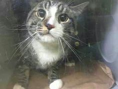 Please save sweet Tony.will be killed tomorrow after Noon at the ACC shelter in New York City URGENT visit pets on death row on Facebook. What a cutie pie!