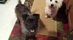 Ally and Gizmo came together as buddies in May.  Ally found a home quickly.  Gizmo found a place in my heart.