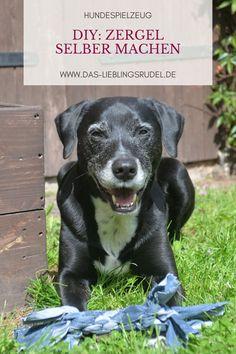 Alle unsere Hundespielzeuge sind geschreddert, also habe ich spontan ein kleines DIY, wie ihr Zerrspielzeug für Hunde selber machen könnt. Dafür braucht ihr gar nicht viel und es geht ganz einfach und schnell. Im Video zeige ich euch, wie ihr ein Zergel für euren Hund bastelt und wieviel Spaß Murdoch und Freya mit meiner alten Jeans haben. Viel Spaß beim Nachbasteln! ♥ Freya, Labrador Retriever, Dogs, Animals, Community, Jeans, Dog Accessories, Diy, Dog Videos