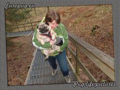 Euro pug walking with mom - http://europug.eu/euro-walking-with/