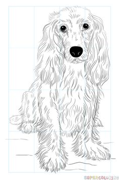 How to draw a Cocker Spaniel step by step. Drawing tutorials for kids and beginners.