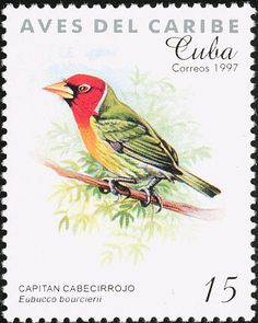 Red-headed Barbet stamps - mainly images - gallery format