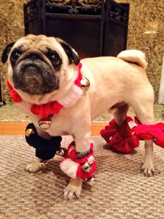 Image result for dog with bells on