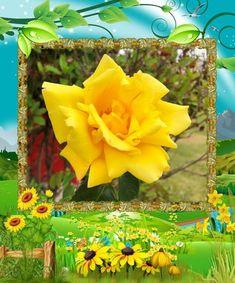 Divagar entre FLORES - ANIMAIS - NATUREZA: Flores em Amarelo Mallard, Zoological Garden, Starting A Blog, Purple Flowers, Yellow, Nature, Animals, Gardens, Wild Flowers