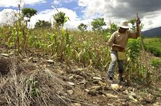 Guatemalas Vanishing Harvests