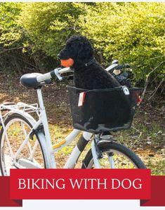 Bike riding with your dog! How to bike with a dog - Dutch Style Bike Dog Trailer, Biking With Dog, Dog Leash, Your Dog, Bicycle, Dogs, Bike, Bicycle Kick, Doggies
