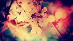 vintage flowers background 10477