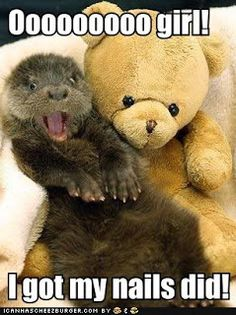 Cute Otter Baby with his Cuddly Toy Teddy Bear Surrogate Mummy Baby Otters, Baby Animals, Funny Animals, Cute Animals, Animal Memes, Wild Animals, Otters Funny, Smiling Animals, Laughing Animals