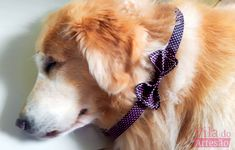 Tutorial Vila do Artesão - Como fazer uma gravata borboleta para seu gato ou cão