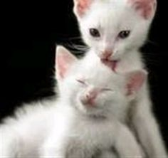 understanding cats behaviour #CatBehaviour - Know more about Cat Behaviour at Catsincare.com!