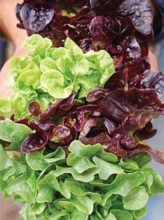 Oakleaf Lettuce Mix