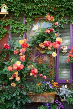 lierre verte pour les murs d'extérieur, fenetre grande, maison avec fenetres