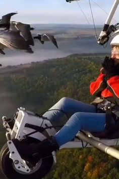This is Amazing! 😍- This is Amazing! Flying with geese! Funny Animal Videos, Cute Funny Animals, Cute Baby Animals, Nature Animals, Animals And Pets, Beautiful Birds, Animals Beautiful, Tier Fotos, Amazing Nature