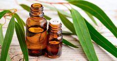 Eucalyptus Globulus, L Eucalyptus, Eucalyptus Essential Oil, Natural Asthma Remedies, Ayurvedic Remedies, Essential Oils For Asthma, Essential Oil Uses, Vicks Vaporub, Aromatherapy