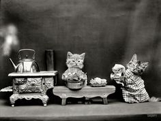 """Domestic Cats. 1914. """"Kittens in costume preparing to make tea with kettle boiling on toy stove."""""""