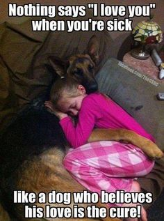 true story #gsd #shepherd #pets