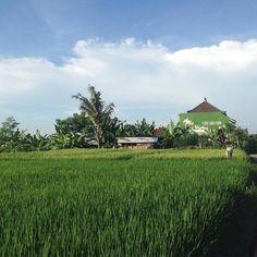Friday morning looks good @goodearthfarmbali  Selamat Pagi  #friyay #blueskies #weekend #ricefields #farmlife #paradise #permaculture #smallfarm #itsthelittlethings #livewell #goodlife #goodearthfarmbali #ubud #bali