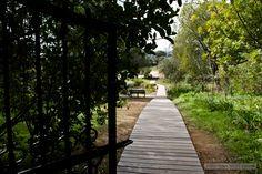 garden path - Google Search