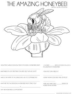 Use this honeybee activity sheet to teach your kids about bees! #education #activitysheet #kids #bees