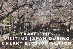Travel Tips : Visiting Japan during Cherry Blossom Season - Land Of Marvels