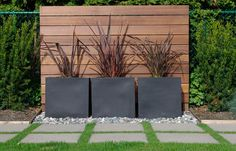 Focal point along fence... Could be a way to fill the gap in our cedar hedge