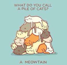 Katten + flauwe humor = ♡