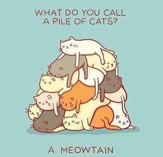 Meowtain. This is a TERRIBLE pun...but I love bad puns and cats.