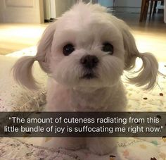 It's too cute https://ift.tt/2xRSsJQ cute puppies cats animals