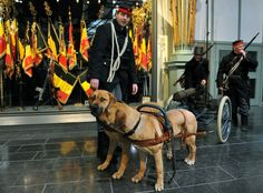 A Belgian machine gun cart pulled by dogs with soldiers dressed in WW1 uniforms is displayed at the Royal Museum of the Army and Military History in Brussels on February 25, 2014. On the occasion of the centenary of the First World War the Royal Museum of the Army and Military History hosts a major exhibition on WW1 and daily life in Belgium occupied by the German army - Georges Gobet