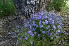 10 Perennial flowers that thrive in compacted clay soil #gardens #soil