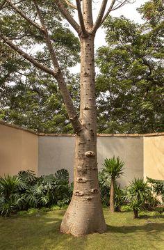 Jardim Lounge Saída - Marcelo Faria. O jardim de 200 m² guarda diversas  espécies f114fe9422b