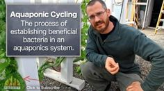 Introducing Fish Into a New Aquaponic System- Bright Agrotech - In this post we answer 2 big questions about introducing fish into a new system.