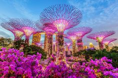 Singapur Tipps Gardens by the Bay Supertrees