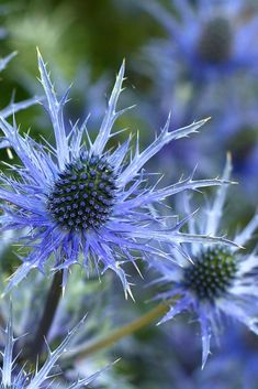 Great idea for blue wedding flowers - more inspo on my blog Types Of Flowers, Cut Flowers, Purple Flowers, Dried Flowers, Large Flowers, Floral Flowers, Seasonal Flowers, Metal Flowers, Flowers Perennials