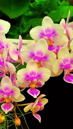 Orchids Flowers Exhibition Beautifully